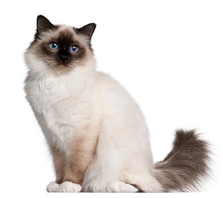 Kitten Care: Must-Know Tips for Raising Kittens